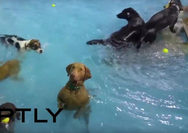 Psa zastihla existenciální krize během vodních procedur