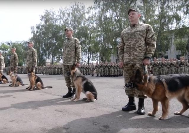 Ukrajinští psi přísahali věrnost zemi a svému pánovi