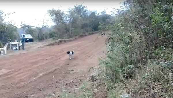 Nejšťastnější pes na světě žije v Bolívii - Sputnik Česká republika