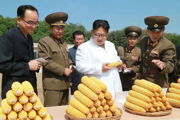 Vojáci ukázali severokorejskému lidrovi úrodu kukuřice. Pro demonstraci byly vybrány úplně stejné klasy - Sputnik Česká republika