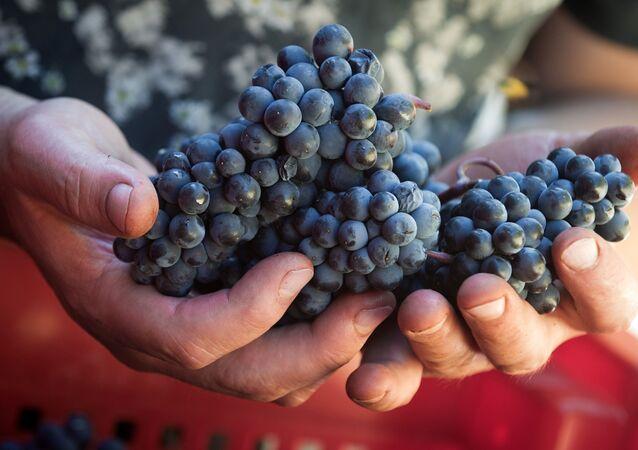 Vinařský podnik UPPA Winery na Krymu