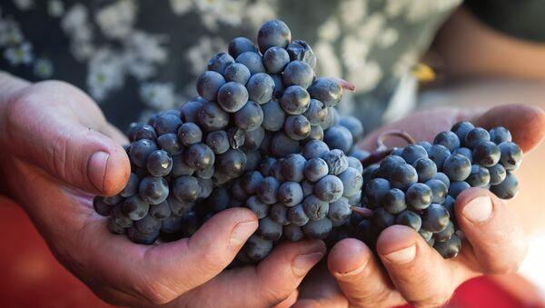 Vinařský podnik UPPA Winery na Krymu - Sputnik Česká republika