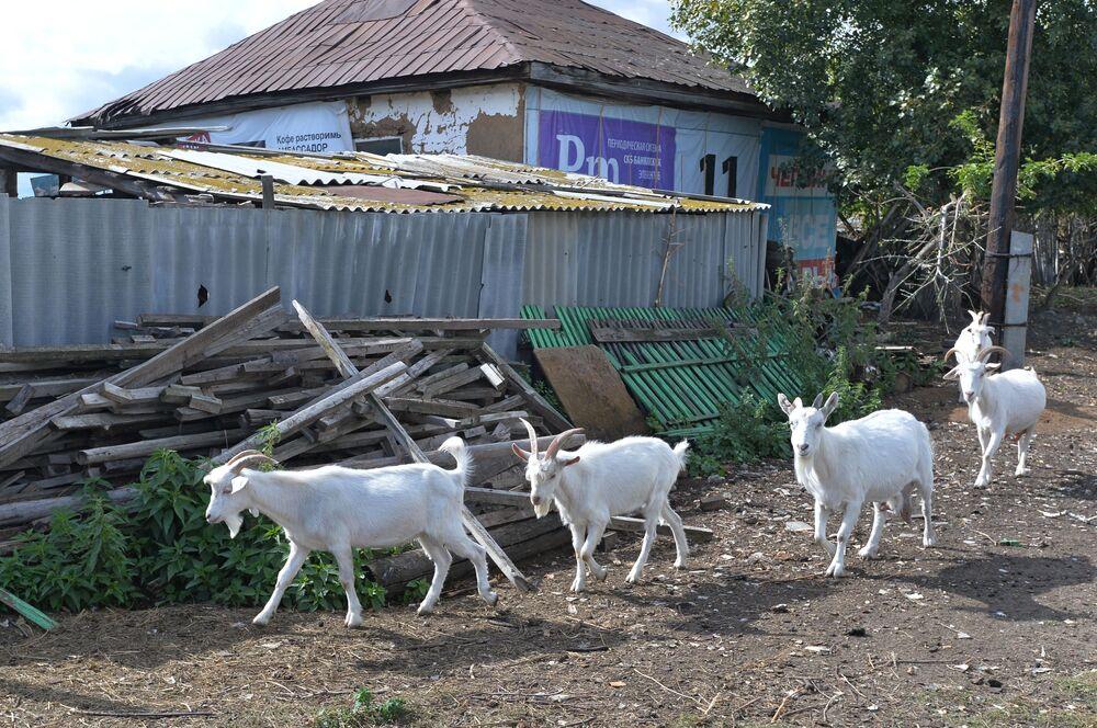 Vesnice Kidyš: jak se žije na ruském venkově