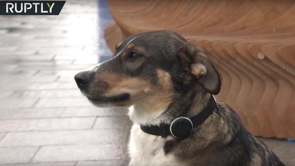 GLONASS-obojky pro psy začali sériově vyrábět - Sputnik Česká republika