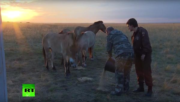 Putin pustil koně Převalského do divoké přírody - Sputnik Česká republika