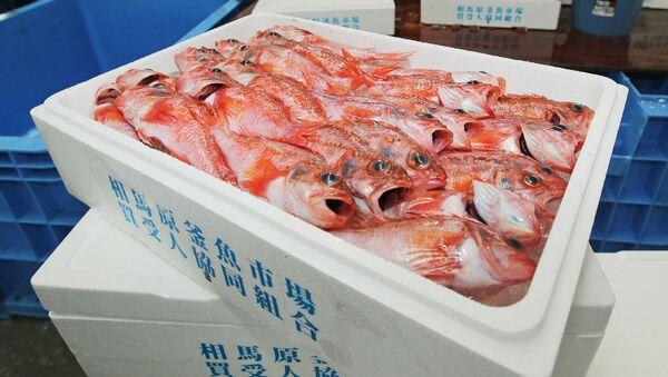 Ryby ulovené v blízkosti Fukušimy - Sputnik Česká republika