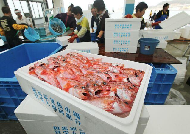 Ryby ulovené v blízkosti Fukušimy