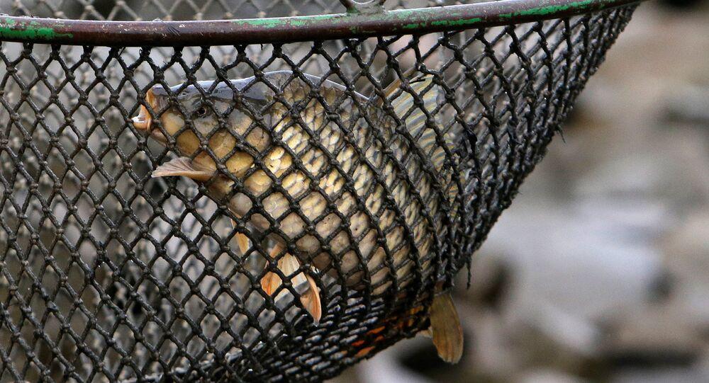 Ryba sebou hází v síti