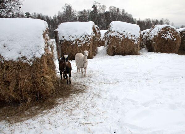 Zima na Sibiři - Sputnik Česká republika