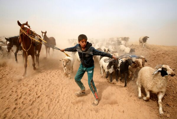 Irácký chlapec-pastevec odhání dobytek na bezpečné místo po odchodu z dobyté teroristy IS vesnice, Irák. - Sputnik Česká republika