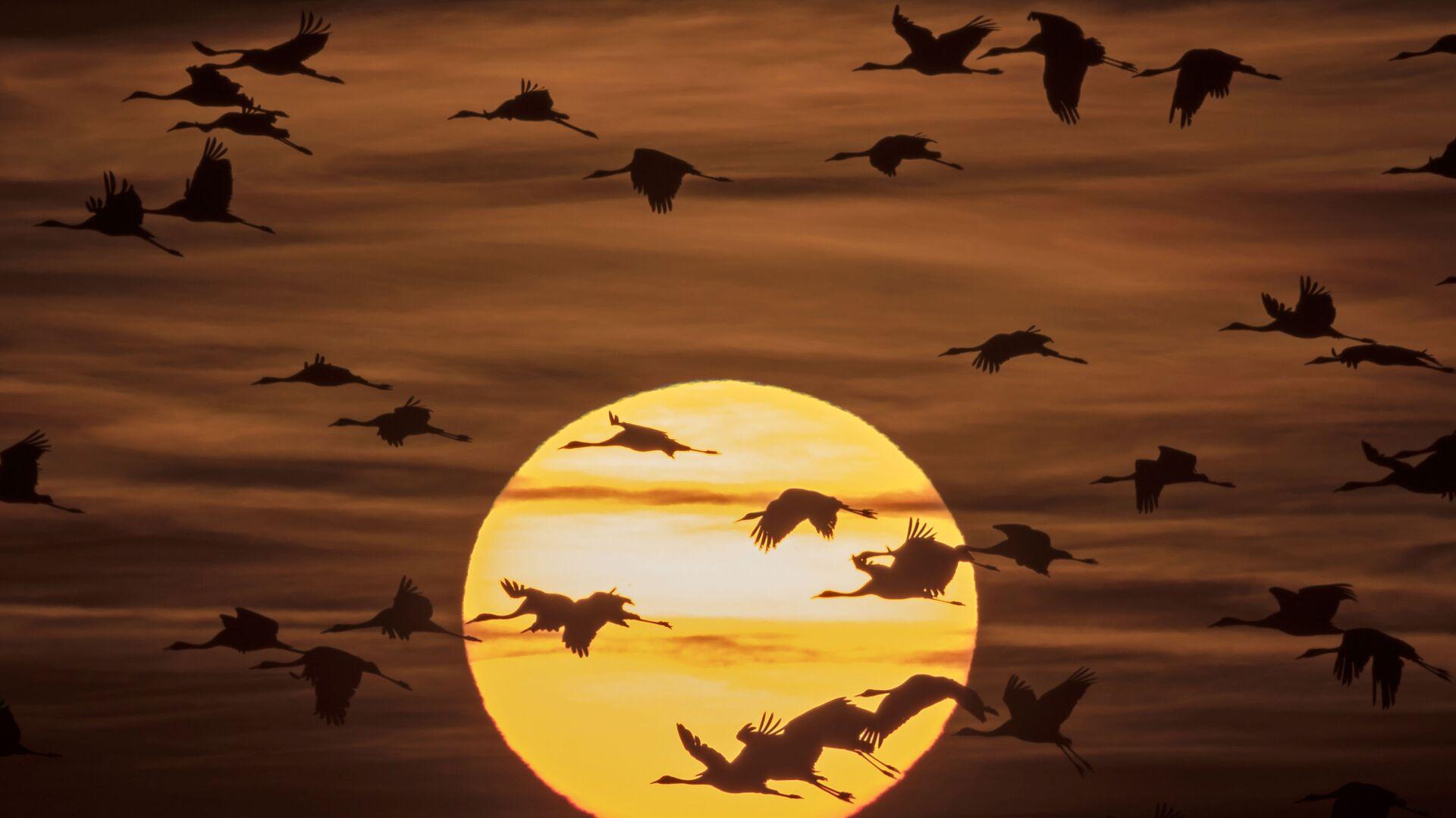 Ptáci na pozadí slunce - Sputnik Česká republika, 1920, 14.09.2021