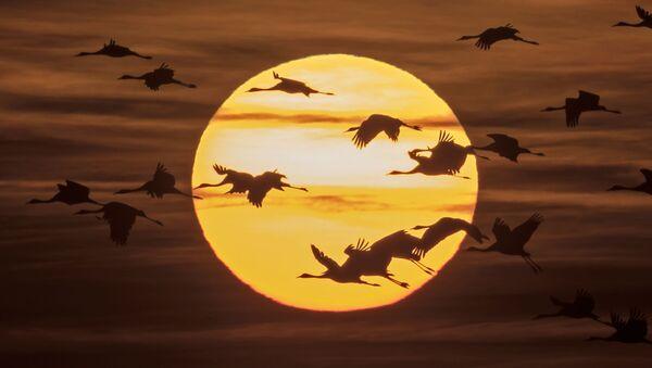 Ptáci na pozadí slunce - Sputnik Česká republika