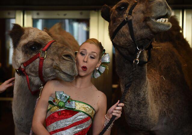 Účastnice Rockette Loren Renk stojí modelkou s velbloudy během požehnání zvířat v Radio City Christmas Spectacular.