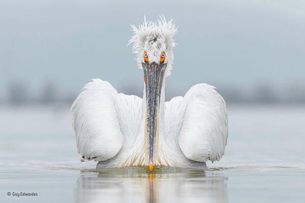 Nejlepší fotografie divoké přírody - Sputnik Česká republika