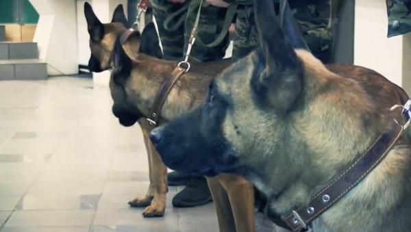 V Jakutsku budou ve službě psí klony - Sputnik Česká republika