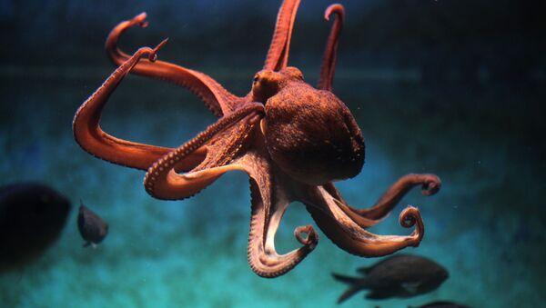 Chobotnice - Sputnik Česká republika