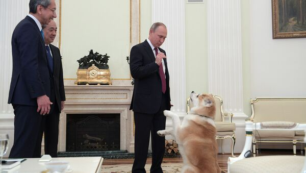 Vladimir Putin se psem Jume - Sputnik Česká republika