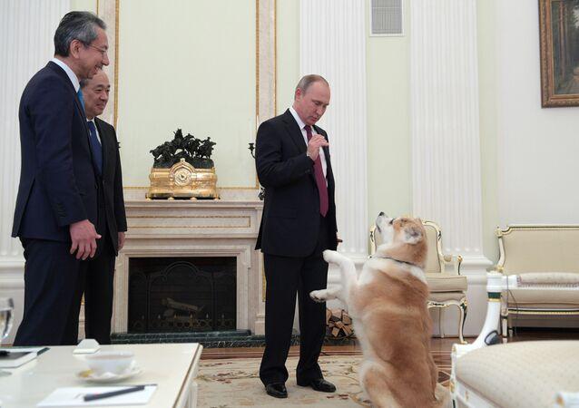 Vladimir Putin se psem Jume
