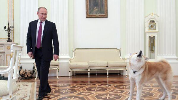 Putin ukazuje  japonským novinářům psa Jume - Sputnik Česká republika