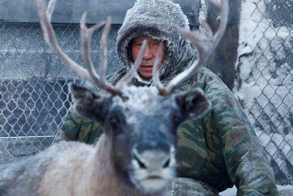 Chov sobů v ruské Arktidě - Sputnik Česká republika