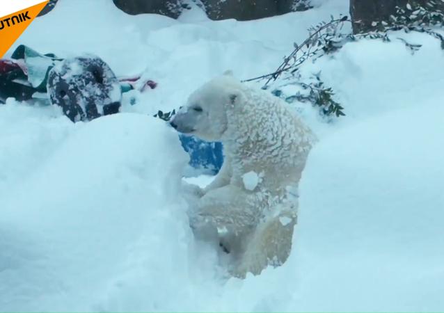První sníh v oregonské zoo