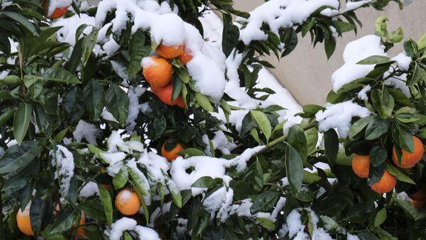 Sníh, vánice a další zimní exotika v různých zemích - Sputnik Česká republika