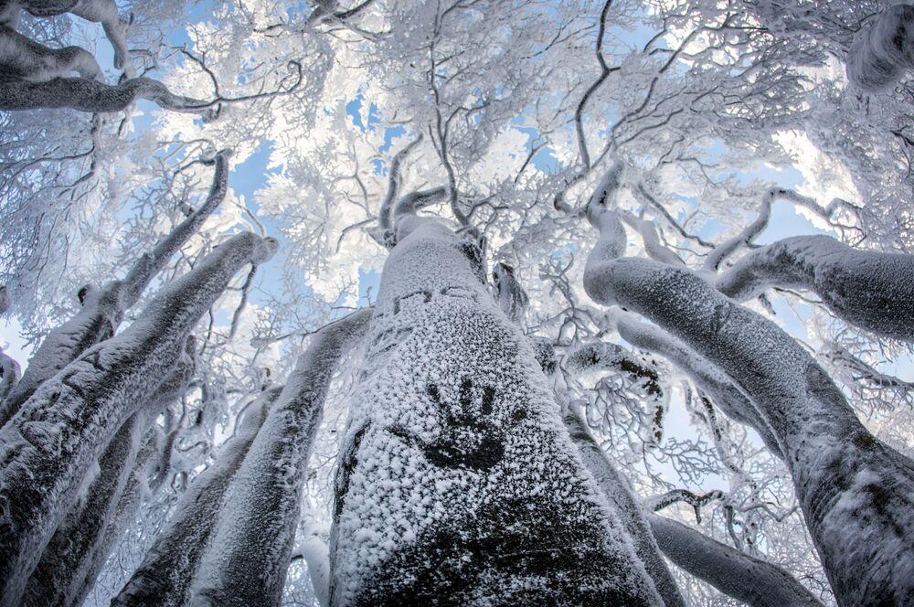 Otisk ruky na zamrzlém stromu v Německu
