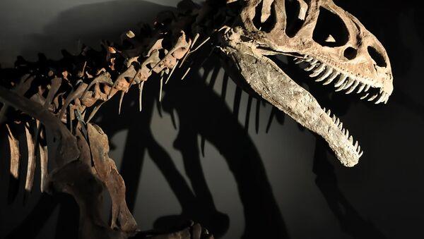 Kostra dinosauru - Sputnik Česká republika