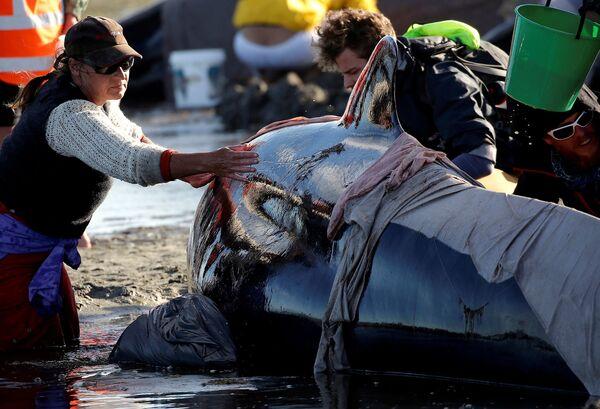 Na břeh Nového Zélandu vyskočilo více než 400 delfínů - Sputnik Česká republika