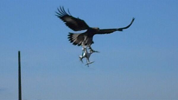 Ve Francii vojáci cvičí orly ochraňovat vzdušný prostor od dronů narušitelů - Sputnik Česká republika