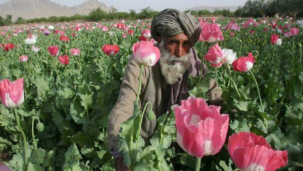 Opium, Afghánistán - Sputnik Česká republika