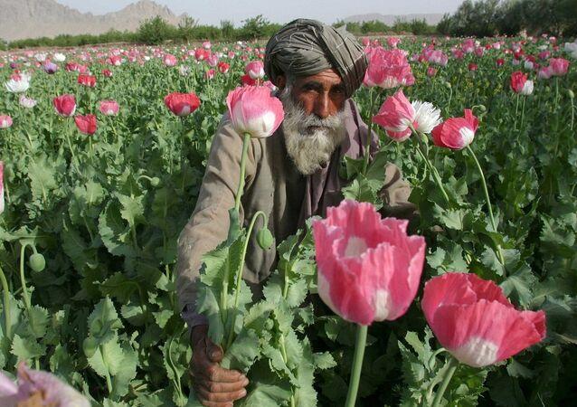 Opium, Afghánistán