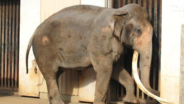 Slon v ZOO. Ilustrační foto - Sputnik Česká republika