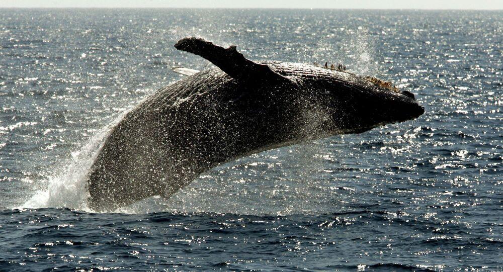 Tajemství světového oceánu