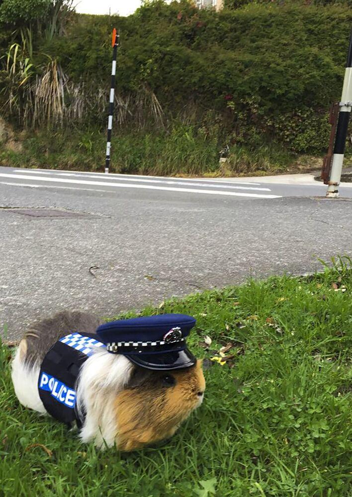 Neobyčejné zvíře v policii