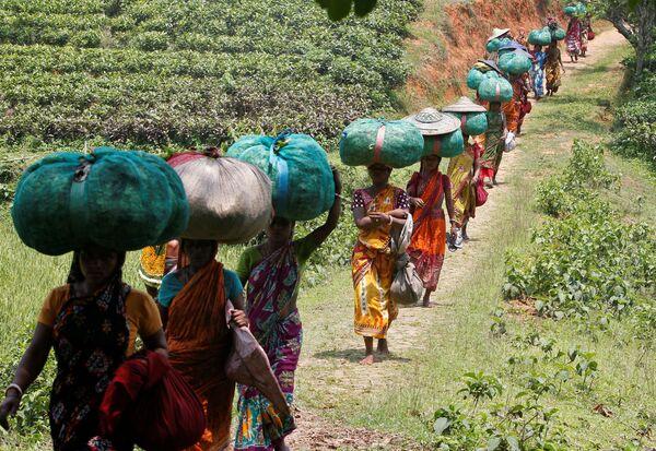 Dělníci nesou pytle s čajovým listím, Indie - Sputnik Česká republika