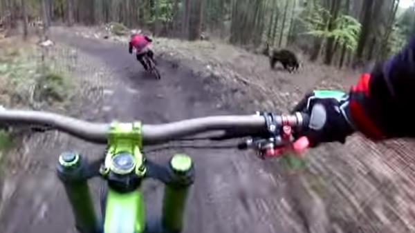 Cyklista natočil medvěda, jenž běžel za jeho kamarádem - Sputnik Česká republika