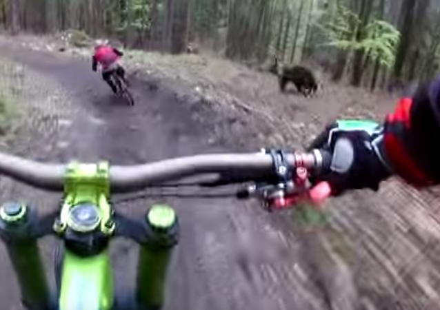 Cyklista natočil medvěda, jenž běžel za jeho kamarádem