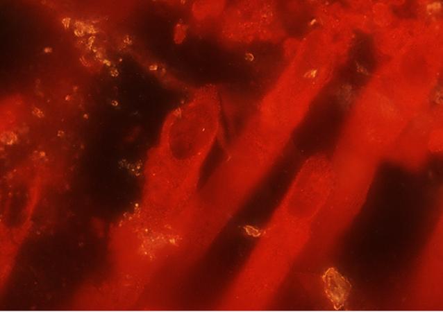 Mikrobi, kteří údajně jsou nejstaršími stopami života