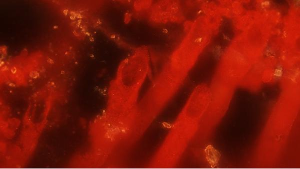 Mikrobi, kteří údajně jsou nejstaršími stopami života - Sputnik Česká republika