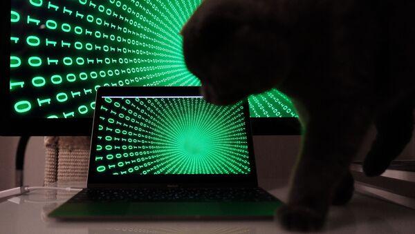 Kočka na pozadí počítače - Sputnik Česká republika