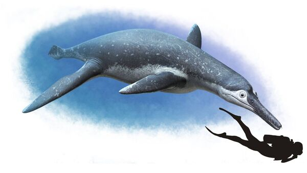 Velký mořský ještěr, pojmenovaný Luskhan itilensis - Sputnik Česká republika