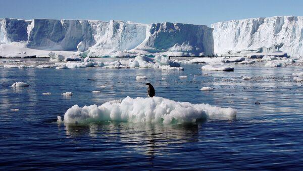 Tučňák v Antarktidě - Sputnik Česká republika