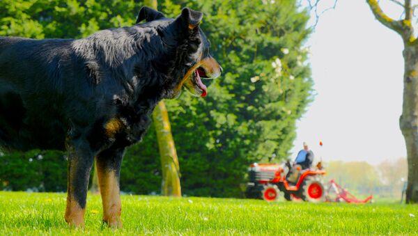 Pes a traktor - Sputnik Česká republika