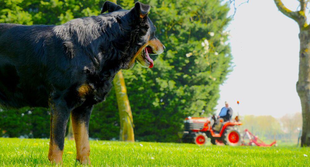 Pes a traktor