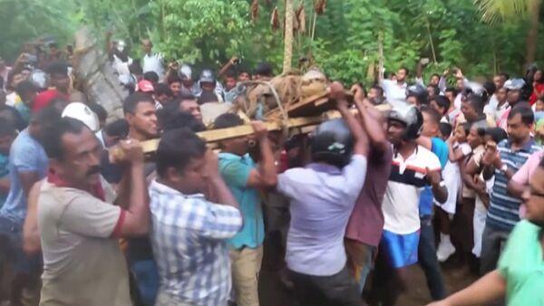 Obyvatelé jedné z vesnic na Srí Lance objevili pětimetrového krokodýla - Sputnik Česká republika