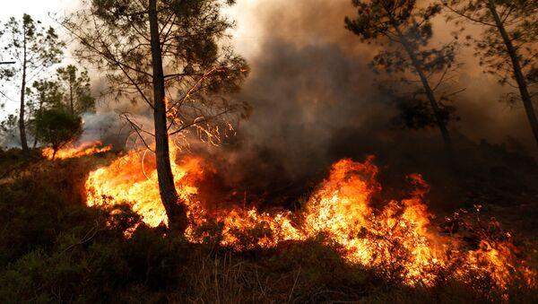 Lesní požár. Ilustrační foto - Sputnik Česká republika