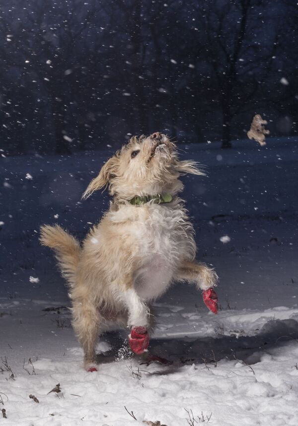 Снимок-победитель конкурса DPOTY в категории I love dogs because фотографа Julian Gottfried - Sputnik Česká republika