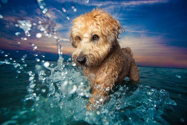 Снимок-победитель конкурса DPOTY в категории Dogs at Play фотографа Kaylee Greer - Sputnik Česká republika