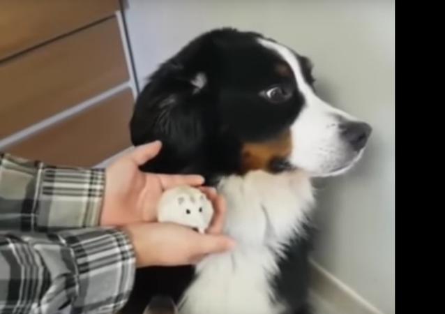 Velký pes se vylekal křečka